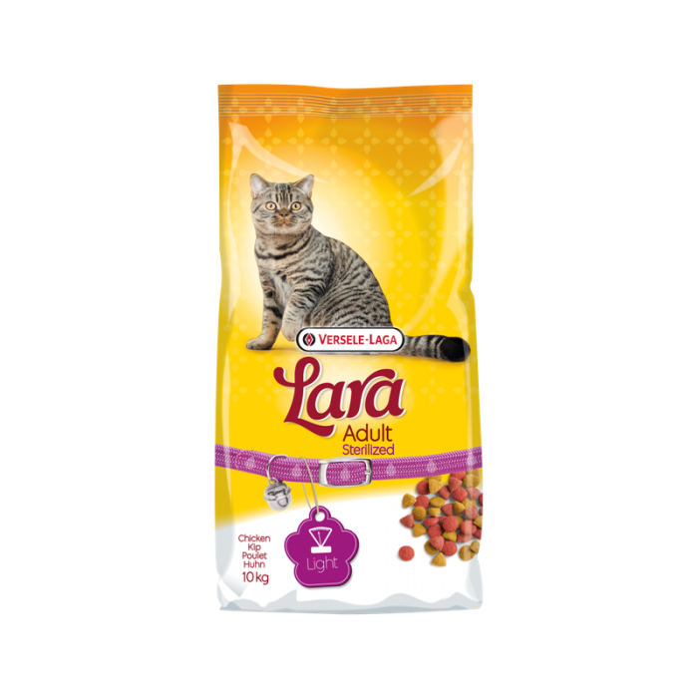 Aucuba du Japon 'variegata'