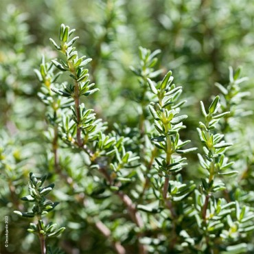 Arizona Egg Pot Graphite D32H31